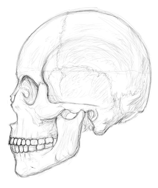 頭蓋横模写