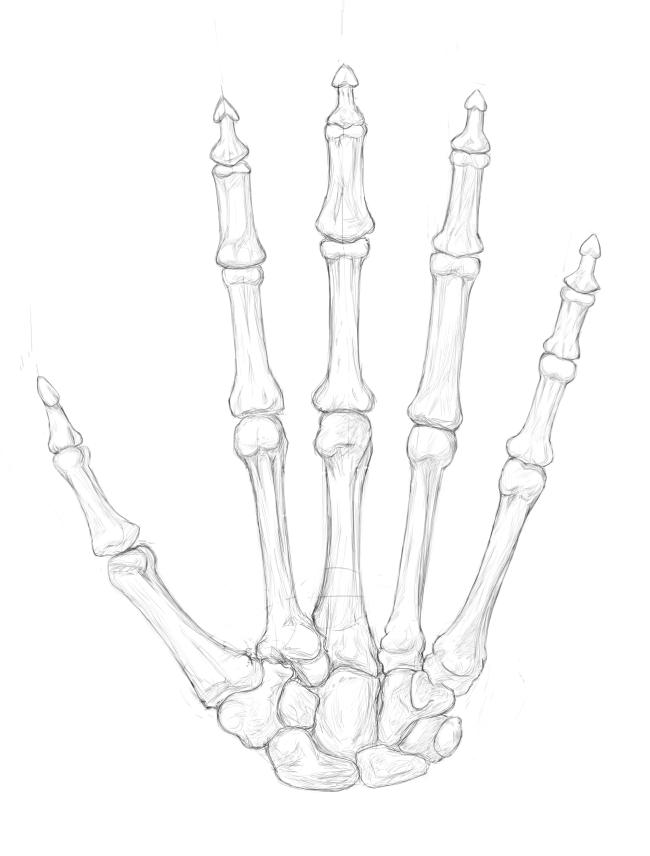 手の骨・手掌側